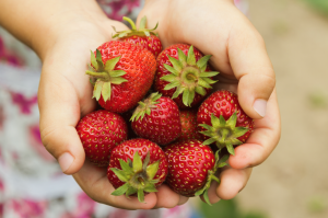 Spring Snacks for Family Fun, strawberries, snacks, fun, treats, spring, cool whip, graham crackers, tasty, delicious, discovery point, child care, childcare, daycare, preschool
